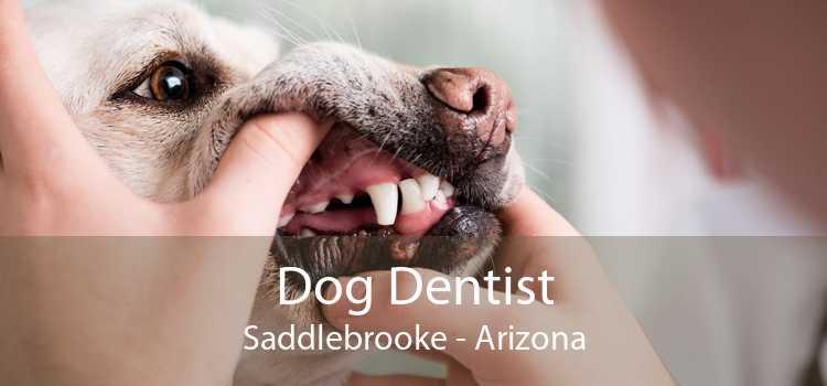 Dog Dentist Saddlebrooke - Arizona