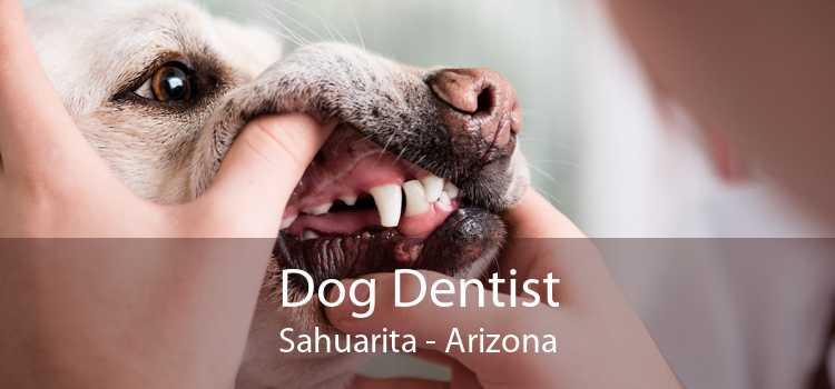 Dog Dentist Sahuarita - Arizona