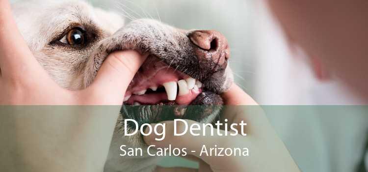Dog Dentist San Carlos - Arizona