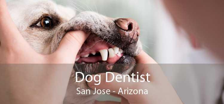 Dog Dentist San Jose - Arizona