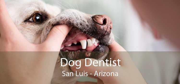 Dog Dentist San Luis - Arizona