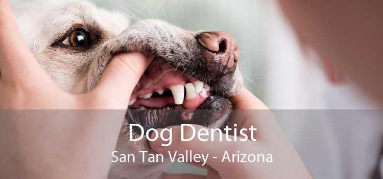 Dog Dentist San Tan Valley - Arizona