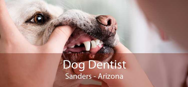 Dog Dentist Sanders - Arizona