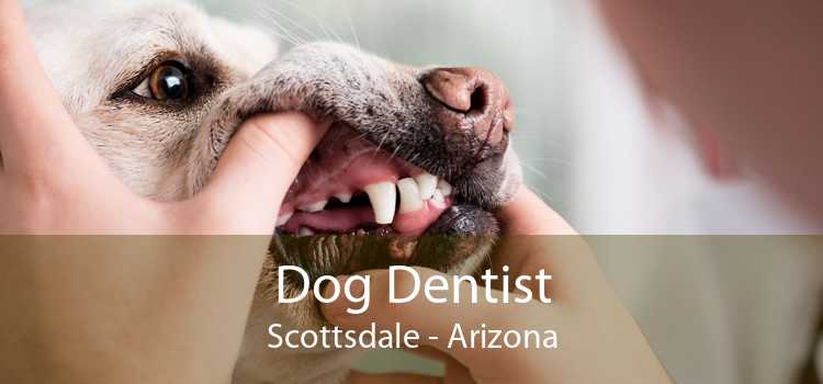 Dog Dentist Scottsdale - Arizona