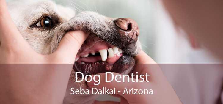 Dog Dentist Seba Dalkai - Arizona