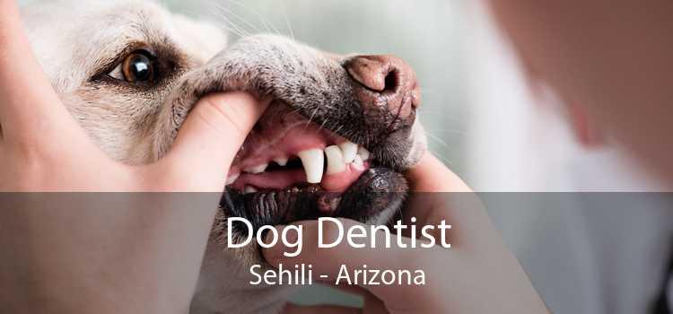 Dog Dentist Sehili - Arizona