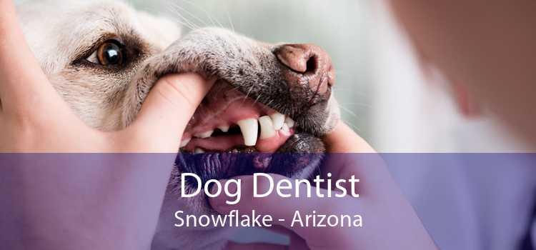 Dog Dentist Snowflake - Arizona
