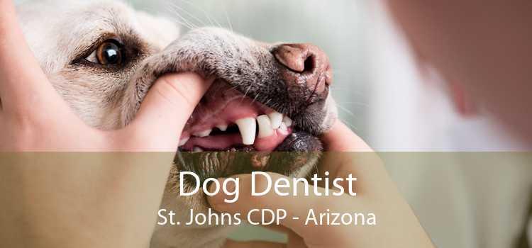Dog Dentist St. Johns CDP - Arizona