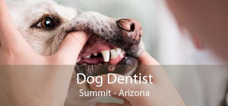 Dog Dentist Summit - Arizona