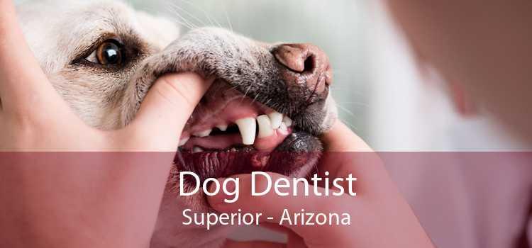 Dog Dentist Superior - Arizona