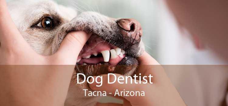Dog Dentist Tacna - Arizona