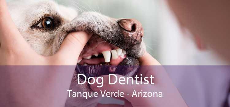 Dog Dentist Tanque Verde - Arizona