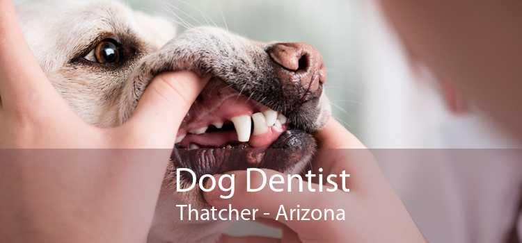 Dog Dentist Thatcher - Arizona