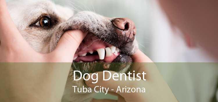 Dog Dentist Tuba City - Arizona