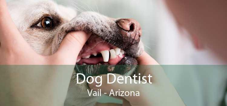Dog Dentist Vail - Arizona