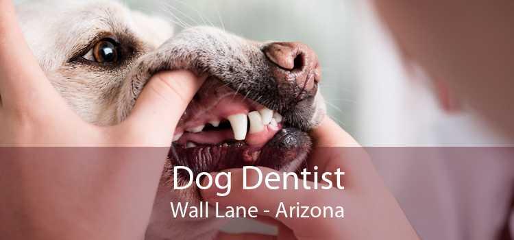Dog Dentist Wall Lane - Arizona