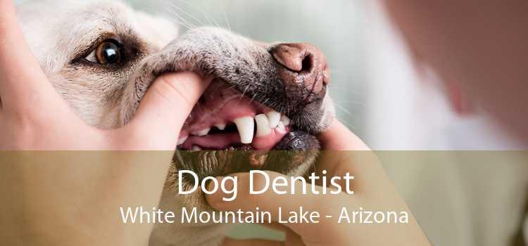 Dog Dentist White Mountain Lake - Arizona