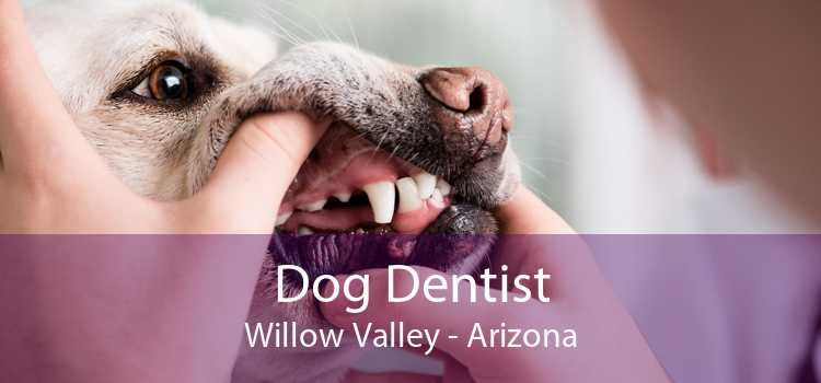 Dog Dentist Willow Valley - Arizona