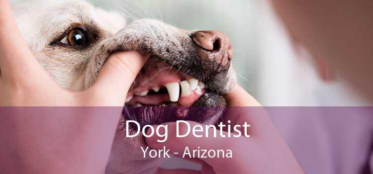 Dog Dentist York - Arizona