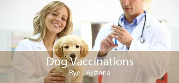 Dog Vaccinations Rye - Arizona
