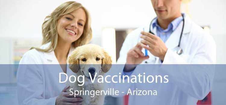 Dog Vaccinations Springerville - Arizona