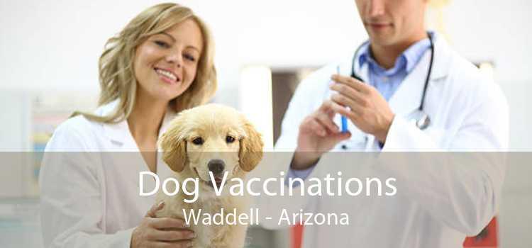 Dog Vaccinations Waddell - Arizona