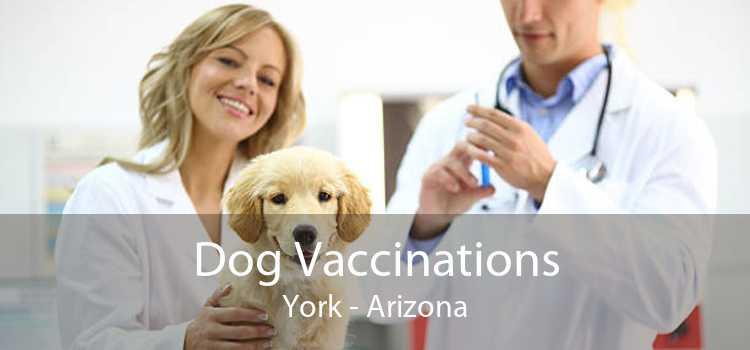 Dog Vaccinations York - Arizona