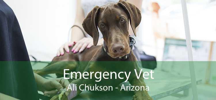 Emergency Vet Ali Chukson - Arizona
