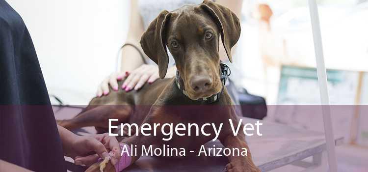 Emergency Vet Ali Molina - Arizona