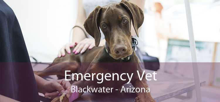 Emergency Vet Blackwater - Arizona