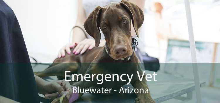 Emergency Vet Bluewater - Arizona