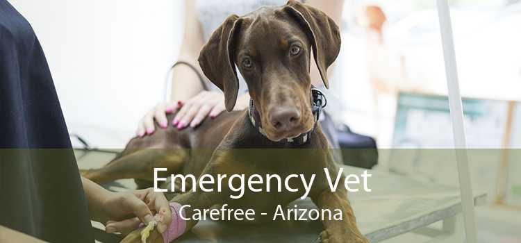 Emergency Vet Carefree - Arizona