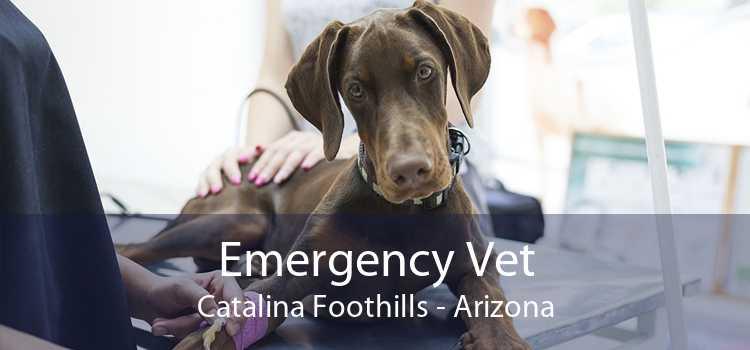 Emergency Vet Catalina Foothills - Arizona