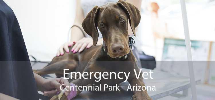 Emergency Vet Centennial Park - Arizona