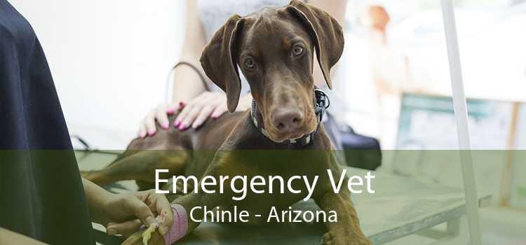 Emergency Vet Chinle - Arizona
