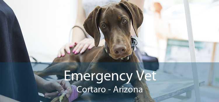 Emergency Vet Cortaro - Arizona
