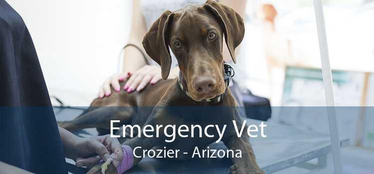 Emergency Vet Crozier - Arizona