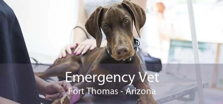 Emergency Vet Fort Thomas - Arizona