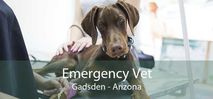 Emergency Vet Gadsden - Arizona