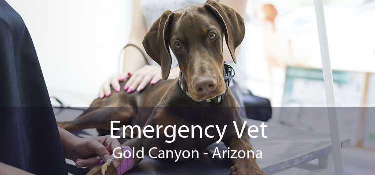 Emergency Vet Gold Canyon - Arizona