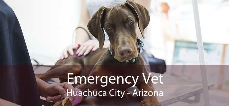 Emergency Vet Huachuca City - Arizona