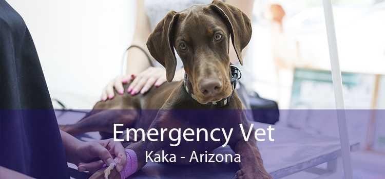 Emergency Vet Kaka - Arizona