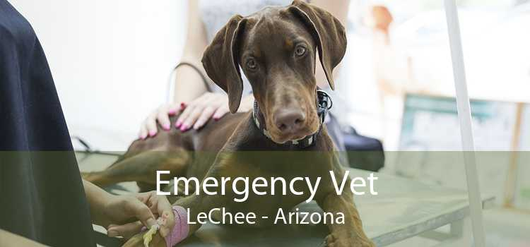 Emergency Vet LeChee - Arizona