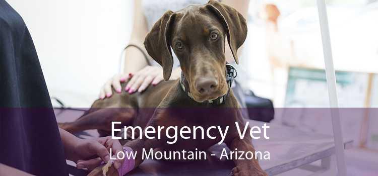 Emergency Vet Low Mountain - Arizona
