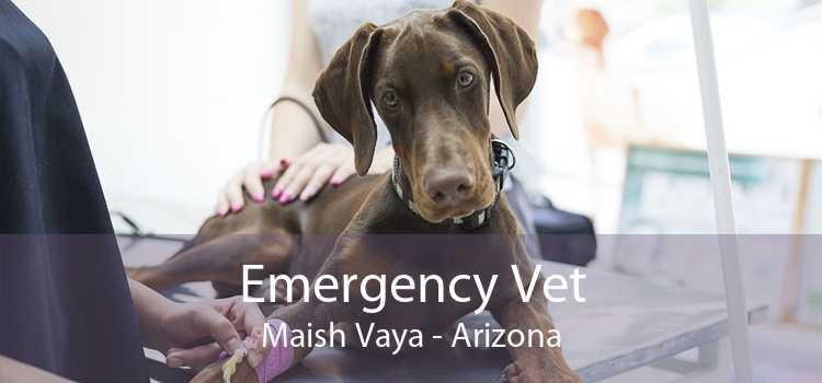 Emergency Vet Maish Vaya - Arizona