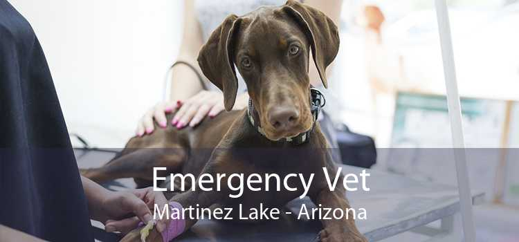 Emergency Vet Martinez Lake - Arizona