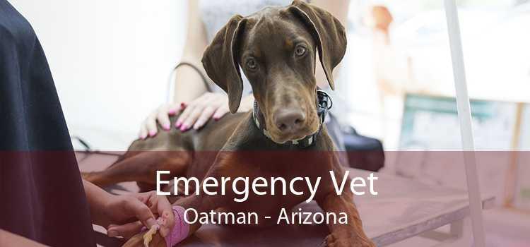 Emergency Vet Oatman - Arizona