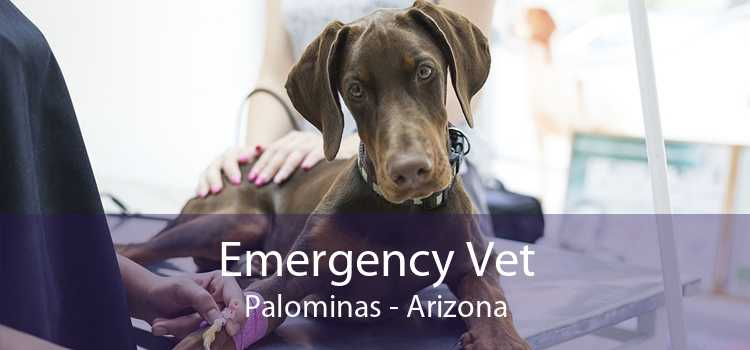 Emergency Vet Palominas - Arizona