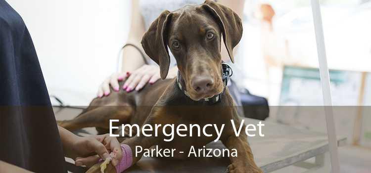 Emergency Vet Parker - Arizona