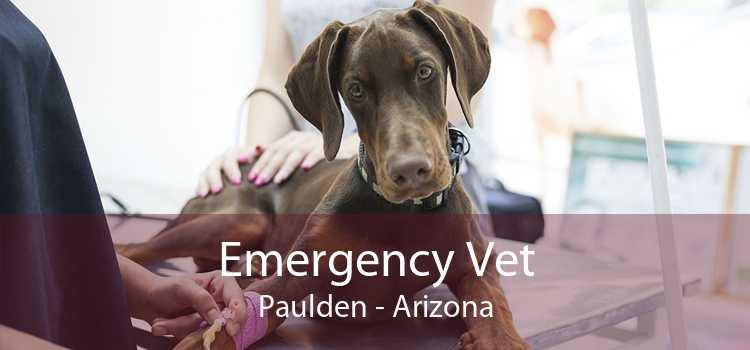 Emergency Vet Paulden - Arizona